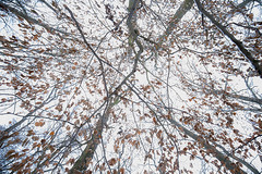 Early winter canopy (Fabien Husslein) Tags: frisange freiseng luxembourg letzebuerg trees forest wood arbres foret canopy canopee nature leaves branches winter autumn