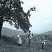 George Stonebridge lifting Georgie up to the apple tree, Willie eating, Grace putting apples in her skirt, Garrison, N.Y., 1902.