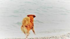 Slow-motion dog (mrsparr) Tags: activeassignmentweekly bestofweek1