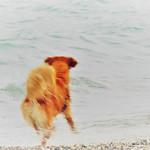 Slow-motion dog thumbnail
