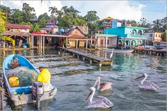les pêcheurs de Livingston, Guatemala (kalzennyg) Tags: guatemala livingston kalzennyg pelicans fishermen caraïbes
