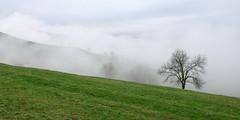 Villacarriedo (Paulo Etxeberria) Tags: villacarriedo picojeniro jiniro pas pisueña paisaia paisaje landscape paysage lainoa niebla mist brouillard zuhaitza árbol tree arbre pasiego