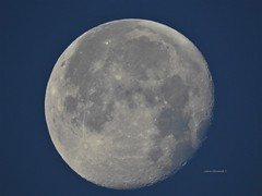 Morning Moon (Anton Shomali - Thank you for over 2 million views) Tags: rise early lunar moon 2018 morning morningmoon coldmoon december december2018 sky light blue closeup macro fullmoon round