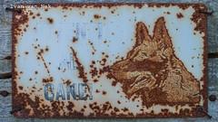 Rusty the Dog (Ivan van Nek) Tags: rustythedog pondel pont dael valléedaoste valledaosta valdaosta d3200 nikon nikond3200 rusty ocidation dog roest hond wachtuvoordehond attentialcane italia italy italien italië derailinator bitchesbrew mysteriousplacewithnoname