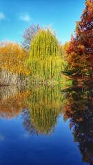 Fall, trees, reflection (voyageurrr) Tags: reflets reflection reflexo reflejo fall autumn automne otono jesien trees arboles arbres