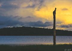 Kaudulla Reservoir (dinukakavinda) Tags: kaudulla national park safari sri lanka lankan srilankan wild life travel landscape reservoir water tree trunk old aged d7200 18 140 dinuka kavinda twilight sun set clouds yellow orange sky