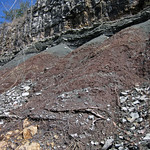 Paleosol (Cave Branch Member, Slade Formation, Upper Mississippian; Clack Mountain Road Outcrop, south of Morehead, Kentucky, USA) 21 thumbnail