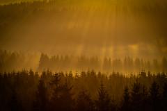 forest series #169 (Stefan A. Schmidt) Tags: warstein nordrheinwestfalen deutschland de sun germany sunbeam sunbeams fog mist dust ethereal golden goldenhour pentaxart