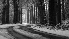 I 'm going around the bend - B&W (Drummerdelight) Tags: trees woods road blackwhite dof lowpov