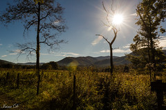 A morning in the cove (Irina1010) Tags: pasture sun trees grasses mountains landscape morning sky blue cadescove smokeymountains autumn october 2018 nature canon outstandingromanianphotographers