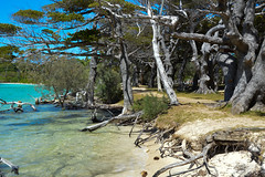 Kanumera Beach (Seventh Heaven Photography *) Tags: kanumera beach bay isle pines new caledonia pacific south islands water sea sky blue trees wood rocks driftwood sand