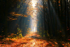 Walker (Little♥Krawler) Tags: nature natur autumn herbst germany deutschland sunrays sonnenstrahlen licht light forest wald human mensch walker
