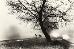 boys in the fog (Pomo photos) Tags: boy boys car tree trees grass landscape street road sepia brown surreal fog mist misty light lights headlight snow winter fujifilm fujifilmxa3 blackandwhite black bw monochrome mono mood people silhouette branch branches leaf leaves candid child children run walking walk