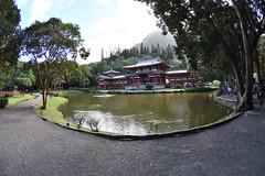 DSC_5790 (jptexphoto) Tags: valleyofthetemples theboydointemple kaneohe hawaii 12232018