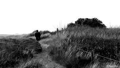 On the path (patrick_milan) Tags: path chemin black one dune saint pabu