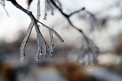 winter (kinaaction) Tags: winter detail winterdetail sonyilce6000 macro wintermacro frost cold freeze mróz hoarfrost zima twigs wintertwigs nature natureofpoland naturalbeauty seasons