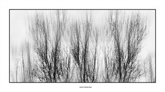 White day... (michel di Méglio) Tags: arbres tree bw noiretblanc monochrome marseille silverefexpro abstrait black white highkey zuiko photoshop photoshopelements olympus winter hiver