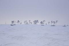 Lined up for Sunrise (Theo Bauhuis) Tags: belgië hogevenen michellucas workshop sneeuw wit waimes wallonie be hautesfagnes snow sunrise white