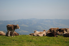 somewhere in Switzerland (nothing@else) Tags: mountins cows switzerland