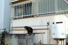 neko-neko2278 (kuro-gin) Tags: cat cats animal japan snap street straycat 猫 sigma dp2