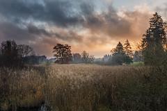 IMG_4261 (Calabrones) Tags: mignonbergeroswald deutschland oberbayern bayern maising herbst landschaft morgenlicht morgennebel morgen nebel sonnenaufgang starnberg bodennebel schilf bäume wolken himmel