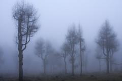 My favourite forest (renatecamin) Tags: forest fog trees wald baum nebel landschaft landscape