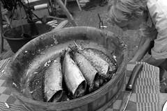 Gutted (Eddy Allart) Tags: vis fish dead vissen delfshaven ketels kade dutch pan