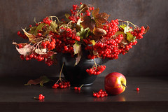 The Color Of Fire And Sunset (panga_ua) Tags: guelderrose viburnumopulus red redberries apple bunches clusters bouquet fall autumn blackvase ceramics brightjuicyberries