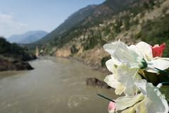 Plastic flowers and the Fraser River (Sir_Francis_Barney) Tags: canada kanada british columbia bridge fraser lillooet