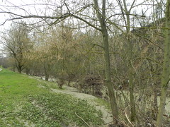 DSCN9957 (Gianluigi Roda / Photographer) Tags: springtime april 2013 creeks savena flood rainflood
