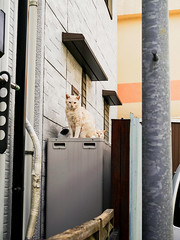 neko-neko2271 (kuro-gin) Tags: cat cats animal japan snap street straycat 猫 gx1