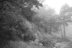 L1009850 (Sonsoles Huidobro) Tags: leicam10 elmarit24 nieve nieblas snow fog landscape