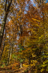 Connecticut Fall Colors, 2018 (billandkent) Tags: 2018 billcannon manchesterconnecticut connecticut fall fallcolors manchester us usa unitedstates billandkent newengland