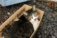 cat in a box 3 (Christine_S.) Tags: box straycat japan canon eos m5 efm32mmf14