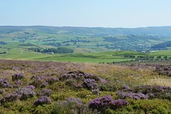 Stiperstones, Shropshire (Seventh Heaven Photography *) Tags: stiperstones shropshire nikon d3200 heather erica wid countryside nature landscape fields trees sky blue