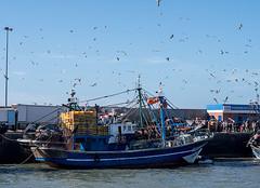 20181116-151 (sulamith.sallmann) Tags: fahrzeug gewässer verkehr afrika atlantik boot boote essaouira hafen marokko meer ozean wasser sulamithsallmann