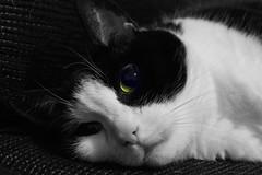 Eye for an eye (tusenord) Tags: fotosondag fs181202 ordsprak cat eye öga katt djur svartvitt monochrome proverb husdjur pet