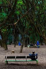 3946 (*Ολύμπιος*) Tags: sãopaulo people persone persons pessoas gente girl garota giovanni garotas giocare gioco giocando giocodeibambini jogo parque parquedajuventude domingo domenica daybyday diaadia street streetlife streetphotography streetphoto sunday