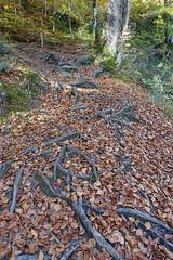 Hike to Belvédère du Mont Lachat @ Thônes