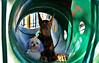 Tunnel - 25 Days of Christmas (samd517) Tags: tunnel playground window park15 days christmas red green doberman maltese rugby bourbon