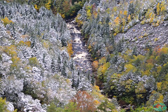 Blackwater canyon (die Augen) Tags: trees snow river water fall canyon canon ls2