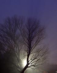 Albero nella nebbia (antonella galardi) Tags: emilia romagna ravenna natale 2018 albero nebbia