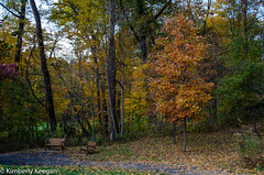 HillsDales2018_DSC_0035 (KKfromBB) Tags: kkfrombb nikon nikond5100 hilldales metropark five rivers metroparks autumn fall 2018 outdoor nature color tree leaf