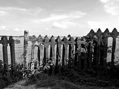 Wild Northwest (Matteo Allochis) Tags: novara ricefield rail station plain decay paddy