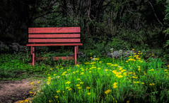 Happy Bench Monday (Jims_photos) Tags: wildflowers texas topazlabssoftware topazsoftware topazlabs topazstudio unitedstates outdoor outside adobelightroom adobephotoshop shadows daytime guadaluperiverstatepark happybenchmonday jimallen jimsphotos jimsphotoswimberleytexas lightroom landscape txpark benchmonday nopeople nikond750
