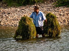 Water Grass (Rod Waddington) Tags: china chinese yangshuo guangxi water grass feed man river li outdoor culture cultural ethnic ethnicity