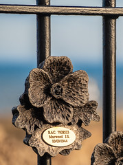 Seaham War Memorial. . . (CWhatPhotos) Tags: cwhatphotos photographs photograph pics pictures pic picture image images foto fotos photography artistic that have which contain lens seaham harbour north east coast november 2018 ray lonsdales artist sculpture steel tommy first world war rust rusting work local 1101 title seafront sea front memorial terrace fence fencing