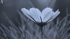 Beauty In its Own (RJ-Clicks) Tags: flower green day garden beautiful plant sun sunlight purple blue nature