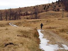 jeges ösvény / icy trail (debreczeniemoke) Tags: ősz autumn túra hiking hegy mountain gutin erdély transilvania transylvania táj land tájkép landscape erdő forest olympusem5
