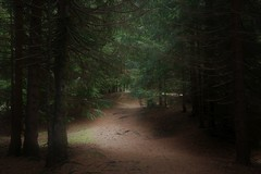 Stillness (annazelei) Tags: road tree wood woods forest pine picea abies green greenwood colors grün evergreen path pathway trail natur naturaleza naturephotography woodland paysage leaves dark outdoor outside light needle peaceful misty mood germany